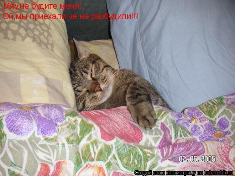 Котоматрица: Мяу,не будите меня! Ой,мы приехали,чё не разбудили!!!