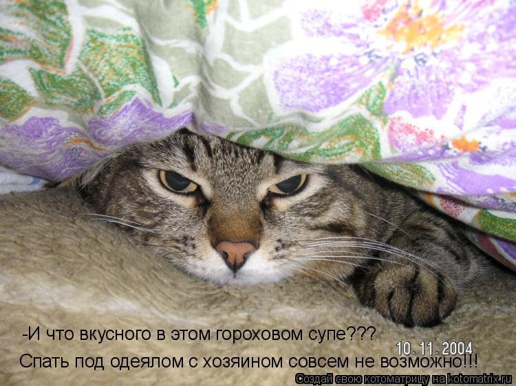 Котоматрица: Спать под одеялом с хозяином совсем не возможно!!! -И что вкусного в этом гороховом супе???