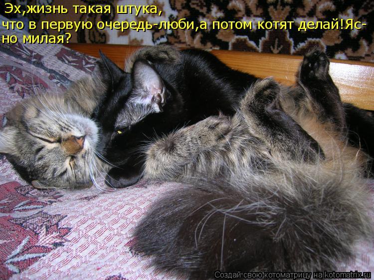 Котоматрица: Эх,жизнь такая штука, что в первую очередь-люби,а потом котят делай!Яс- но милая?