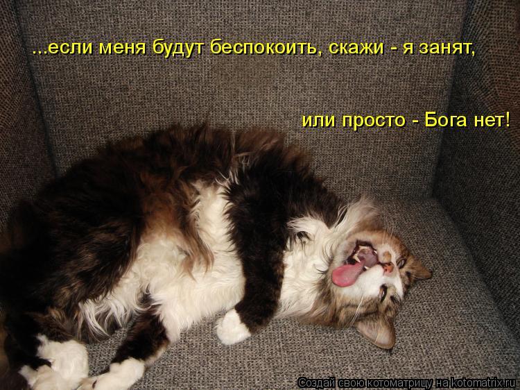 Котоматрица: ...если меня будут беспокоить, скажи - я занят,  или просто - Бога нет!
