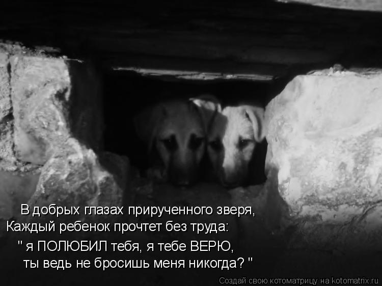 """Котоматрица: В добрых глазах прирученного зверя, Каждый ребенок прочтет без труда: """" я ПОЛЮБИЛ тебя, я тебе ВЕРЮ, ты ведь не бросишь меня никогда? """""""