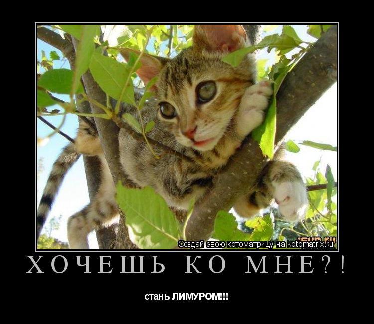 Котоматрица: Хочешь ко мне?! стань ЛИМУРОМ!!!