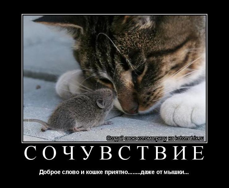 Котоматрица: сочувствие Доброе слово и кошке приятно........даже от мышки...