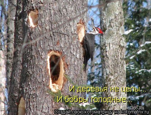 Котоматрица: И деревья не целы... И бобры голодные...
