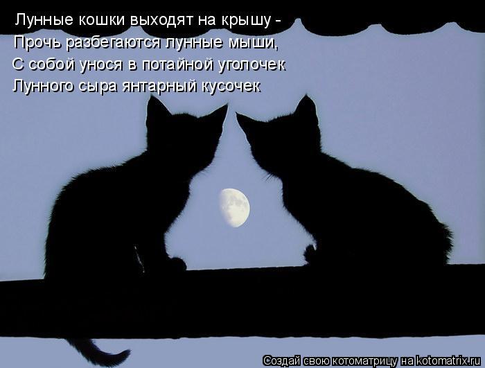 Котоматрица: Лунные кошки выходят на крышу -  С собой унося в потайной уголочек Прочь разбегаются лунные мыши, Лунного сыра янтарный кусочек