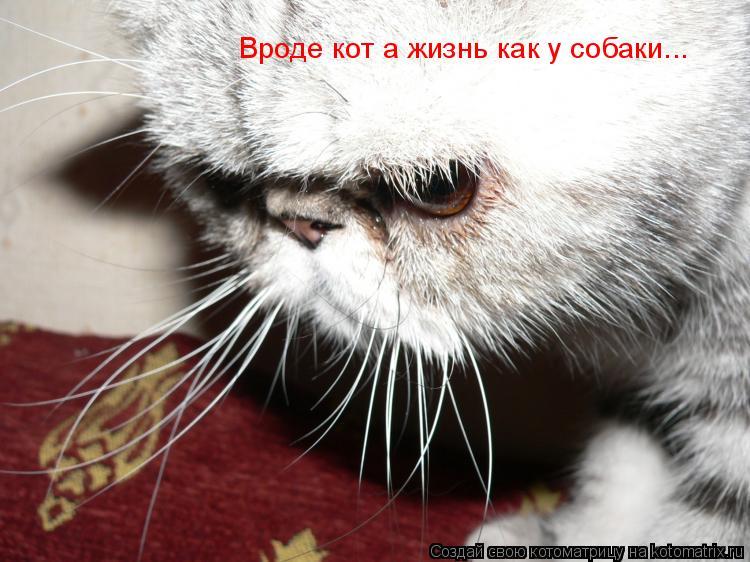 Котоматрица: Вроде кот а жизнь как у собаки...