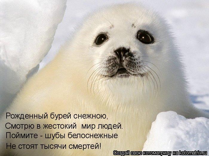 Котоматрица: Не стоят тысячи смертей! Рожденный бурей снежною, Смотрю в жестокий  мир людей… Поймите - шубы белоснежные
