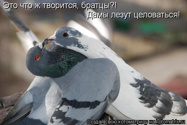 Котоматрица: Это что ж творится, братцы?! Дамы лезут целоваться!