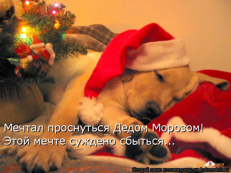 Котоматрица: Мечтал проснуться Дедом Морозом! Этой мечте суждено сбыться...