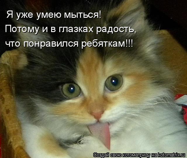 Котоматрица: Я уже умею мыться! Потому и в глазках радость, что понравился ребяткам!!!