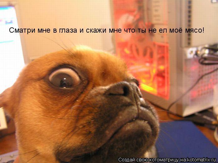 Котоматрица: Сматри мне в глаза и скажи мне что ты не ел моё мясо!