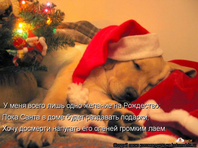 Котоматрица: Пока Санта в доме будет раздавать подарки, Хочу досмерти напугать его оленей громким лаем. У меня всего лишь одно желание на Рождество: