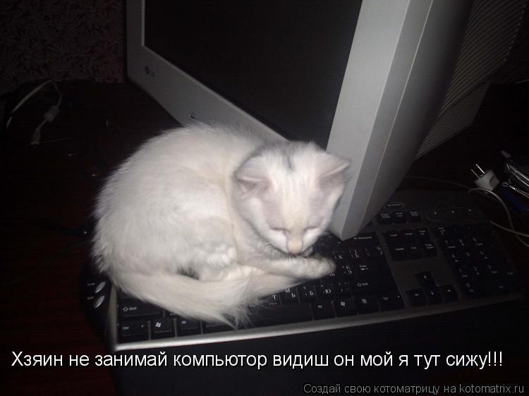 Котоматрица: Хзяин не занимай компьютор видиш он мой я тут сижу!!!