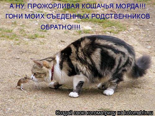 Котоматрица: А НУ, ПРОЖОРЛИВАЯ КОШАЧЬЯ МОРДА!!! ГОНИ МОИХ СЪЕДЕННЫХ РОДСТВЕННИКОВ ОБРАТНО!!!!