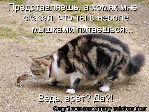 Котоматрица: Представляешь, а хомяк мне сказал, что ты в неволе мышками питаешься... Ведь, врёт? Да?!