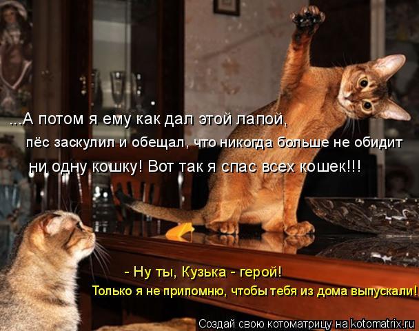 Котоматрица: ...А потом я ему как дал этой лапой, пёс заскулил и обещал, что никогда больше не обидит  ни одну кошку! Вот так я спас всех кошек!!! Только я не п