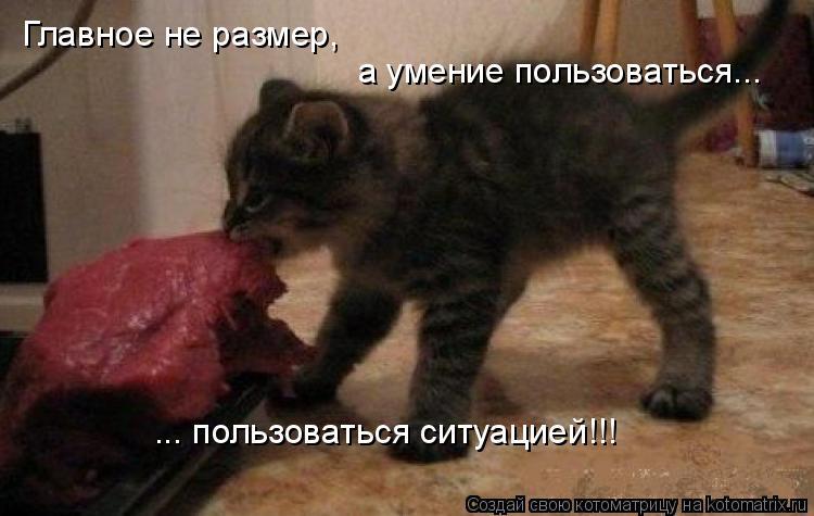 Котоматрица: Главное не размер, а умение пользоваться... ... пользоваться ситуацией!!!