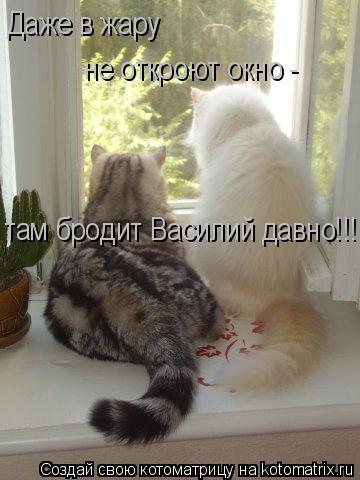 Котоматрица: Даже в жару  не откроют окно - там бродит Василий давно!!!