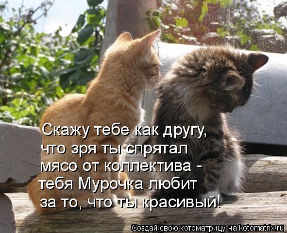 Котоматрица: Скажу тебе как другу, что зря ты спрятал  мясо от коллектива - тебя Мурочка любит  за то, что ты красивый!