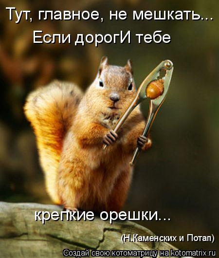 Котоматрица: Тут, главное, не мешкать... Если дорогИ тебе  крепкие орешки... (Н.Каменских и Потап)