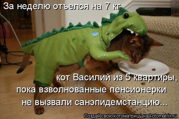 Котоматрица: кот Василий из 5 квартиры, пока взволнованные пенсионерки  не вызвали санэпидемстанцию... За неделю отъелся на 7 кг