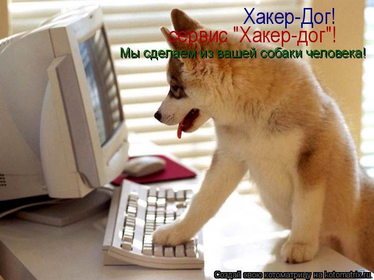 """Котоматрица: Хакер-Дог! сервис """"Хакер-дог""""! Мы сделаем из вашей собаки человека!"""