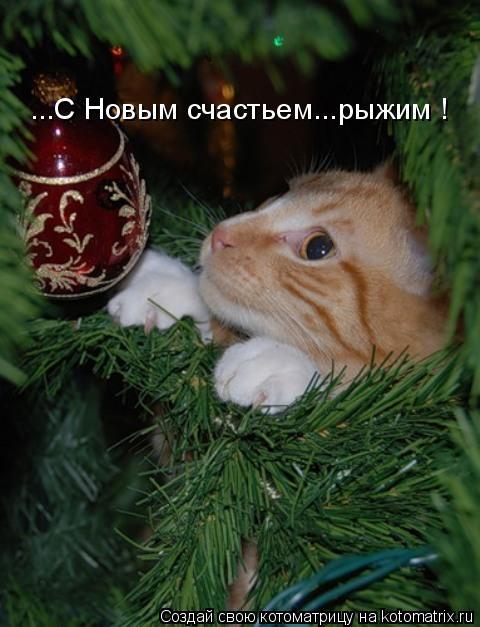 Котоматрица: ...С Новым счастьем...рыжим !
