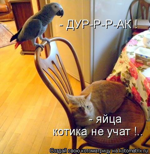 Котоматрица: - ДУР-Р-Р-АК ! - яйца  котика не учат !..