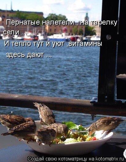 Котоматрица: Пернатые налетели , на тарелку  сели ... И тепло тут и уют ,витамины  здесь дают ...