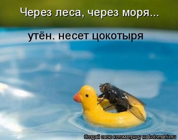 Котоматрица: Через леса, через моря... утён. несет цокотыря
