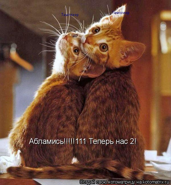 Котоматрица: Абламись!!!!!111 Теперь нас 2! Тамплиер Тамплиер Тамплиер