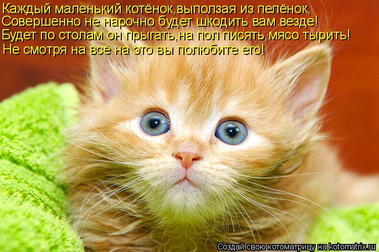 Котоматрица: Каждый маленький котёнок,выползая из пелёнок, Совершенно не нарочно будет шкодить вам везде! Будет по столам он прыгать,на пол писять,мясо