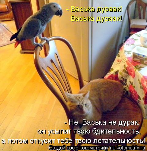 Котоматрица: - Васька дураак! Васька дураак! - Не, Васька не дурак: он усыпит твою бдительность, а потом откусит тебе твою летательность!