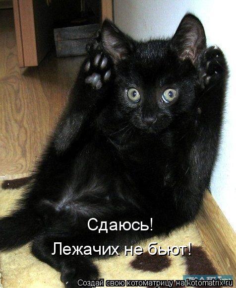 Котоматрица: Сдаюсь!  Лежачих не бьют!