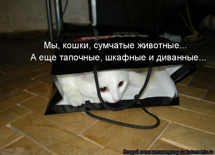 Котоматрица: Мы, кошки, сумчатые животные... А еще тапочные, шкафные и диванные...