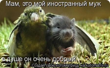 Котоматрица: Мам, это мой иностранный муж в душе он очень добрый...