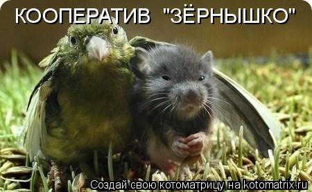 "Котоматрица: КООПЕРАТИВ  ""ЗЕРНЫШКО"" .."