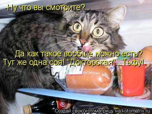 """Котоматрица: -Ну что вы смотрите?.. Да как такое вообще можно есть? Тут же одна соя! """"Докторская""""...Тьфу!"""
