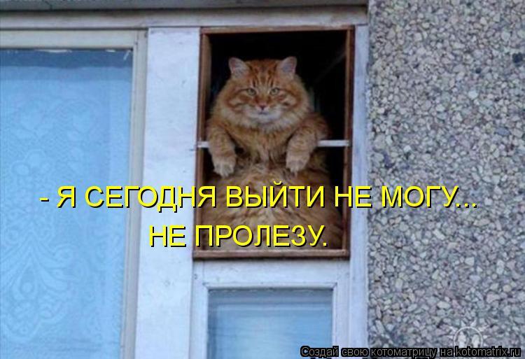Котоматрица: - Я СЕГОДНЯ ВЫЙТИ НЕ МОГУ... НЕ ПРОЛЕЗУ.
