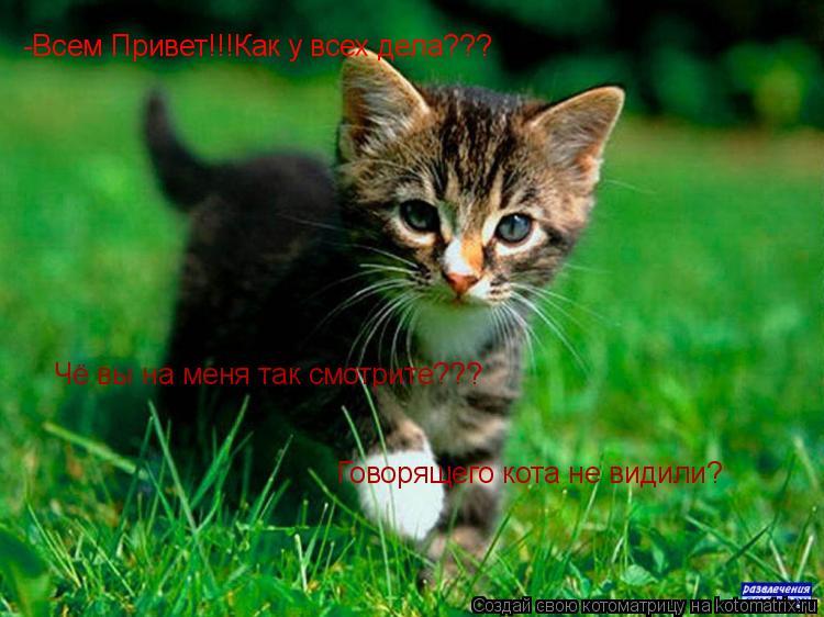 Котоматрица: -Всем Привет!!!Как у всех дела??? Чё вы на меня так смотрите??? Говорящего кота не видили?