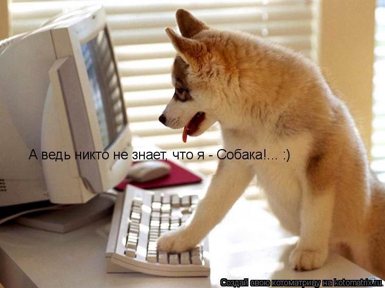 Котоматрица: А ведь никто не знает, что я - Собака!... :)