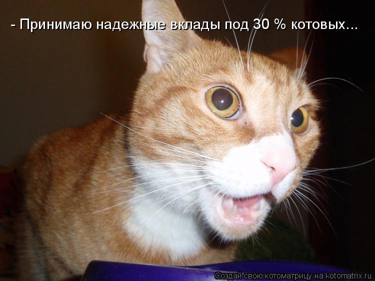 Котоматрица: - Принимаю надежные вклады под 30 % котовых...