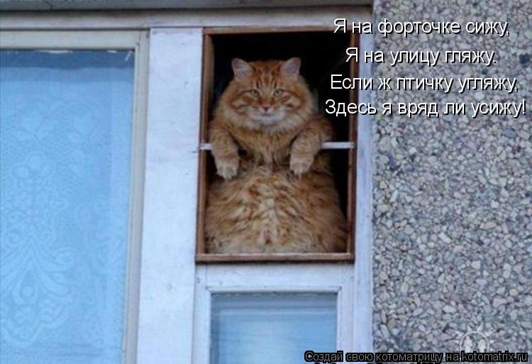 Котоматрица: Я на форточке сижу,  Я на улицу гляжу. Если ж птичку угляжу, Здесь я вряд ли усижу!