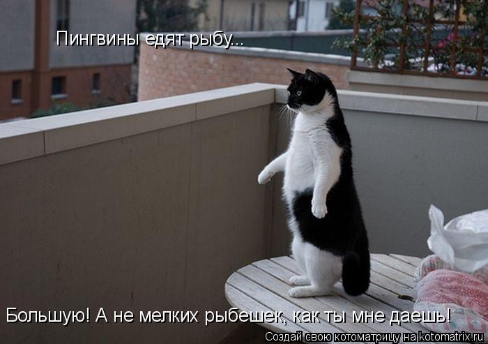 Котоматрица: Пингвины едят рыбу... Большую! А не мелких рыбешек, как ты мне даешь!