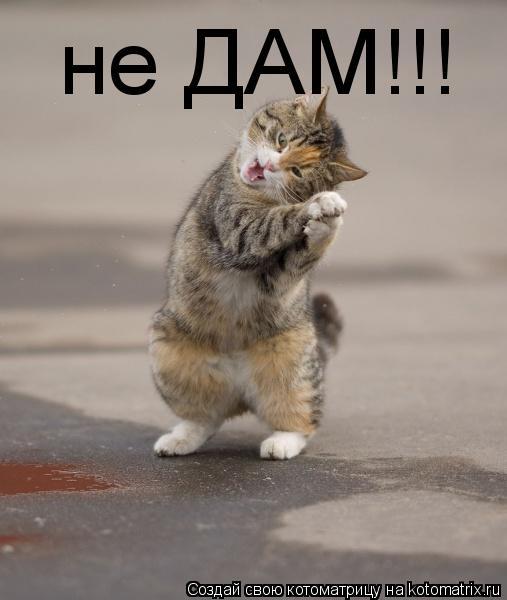 Котоматрица: не ДАМ!!!