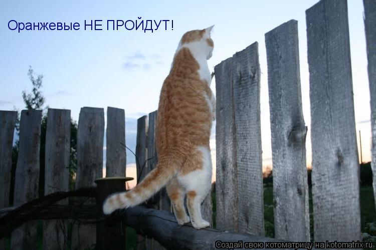 Котоматрица: Оранжевые НЕ ПРОЙДУТ!