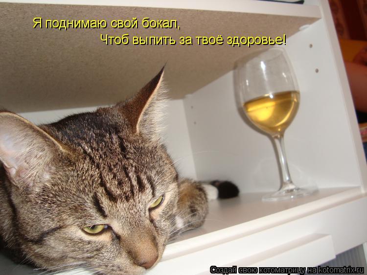 Котоматрица: Чтоб выпить за твоё здоровье! Я поднимаю свой бокал,