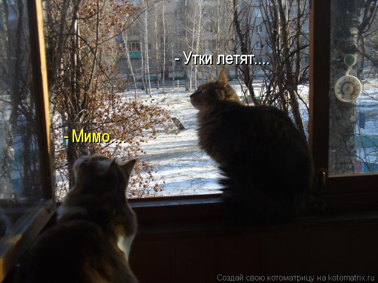Котоматрица: - Утки летят.... - Мимо....
