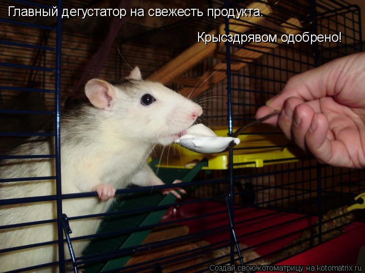 Котоматрица: Главный дегустатор на свежесть продукта. Крысздрявом одобрено!