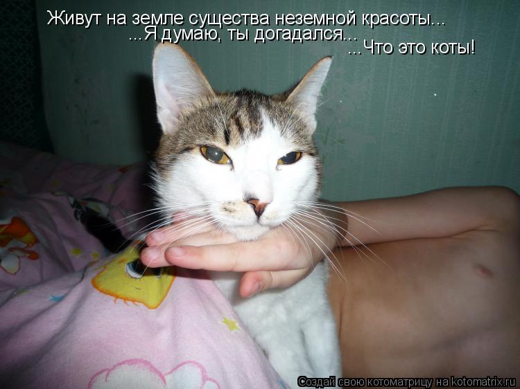 Котоматрица: Живут на земле существа неземной красоты... ...Я думаю, ты догадался... ...Что это коты!